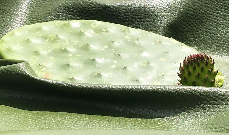 deserto cactus leather