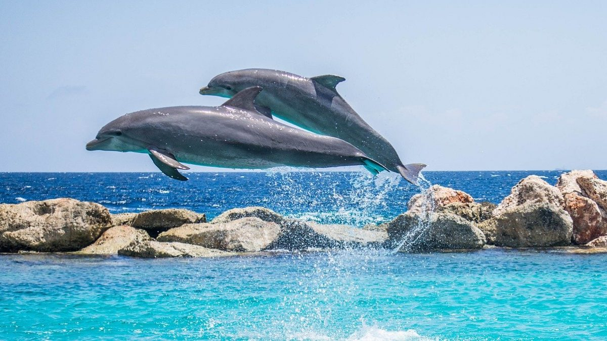 Dolphins Become Friends By Having Similar Interests, Like We Do