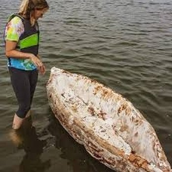 katy ayers mushroom canoe