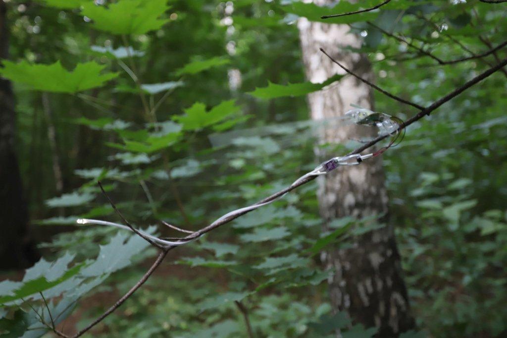 anemokinetics tree energy
